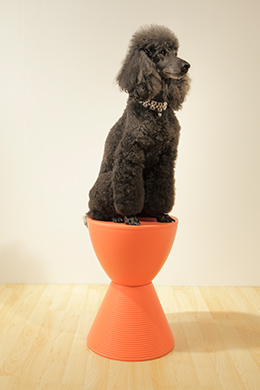Bella and Orange Sallie Stool